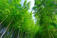千葉県 爽やかな竹林
