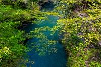 石川県 加賀温泉郷 山中温泉 こおろぎ橋から望む清流