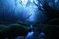 鹿児島県 屋久島 白谷雲水峡 渓流