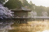 奈良県 浮見堂