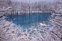 北海道 樹氷と青い沼 美瑛にて