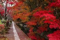 京都府 哲学の道