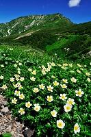 富山県 チングルマと奥大日岳