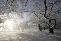 東京都 積雪の代々木公園の朝
