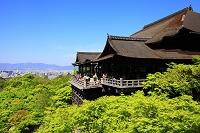 京都府 清水寺 新緑の本堂舞台と京都市街