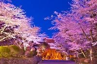 滋賀県 桜ライトアップの三井寺