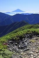 静岡県 上河内岳 夏の富士山と山並みと雲海
