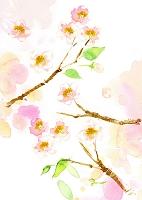 水彩画 桜