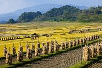 山形県 椹平の棚田