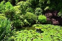 宮城県 天麟院の庭