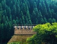 杉林と藁葺き屋根 福井県