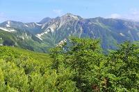 岐阜県 双六小屋から三俣小屋への登山道より見るハイマツと鷲羽岳