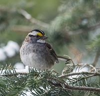 カナダ オンタリオ州 鳥