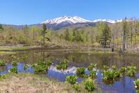 長野県 初夏の乗鞍高原のどじょう池に映る乗鞍岳と青空