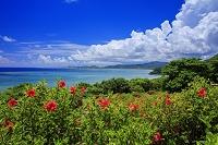 沖縄県 夏のハイビスカス咲く玉取崎よりエメラルドグリーンの海...