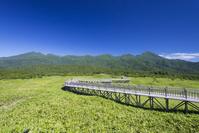 北海道 知床五湖 高架木道と知床連山