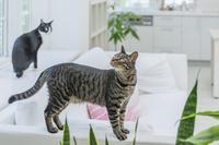 リビングで遊ぶ2匹の猫
