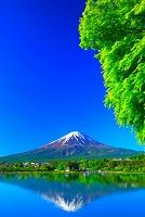 山梨県 新緑の富士山と河口湖