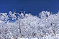 北海道 オロフレ峠の樹氷
