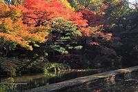 東京都 紅葉 小石川後楽園