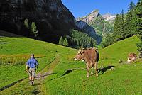 スイス ヨーロッパ山岳地帯の移牧