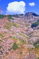 奈良県 桜の咲く吉野山