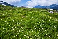 富山県 立山黒部アルペンルート 室堂平 大日岳