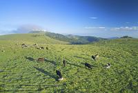 長野県 上田市 美ヶ原牧場と朝霧たなびく王ヶ頭と輝く塔