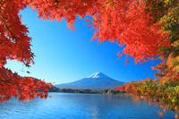 山梨県 河口湖 モミジと富士山