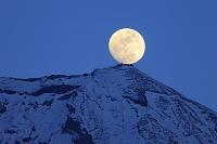静岡県 朝霧高原から見る夕刻の富士山と剣ヶ峰に昇る月