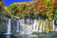 日本 静岡県 白糸の滝の紅葉