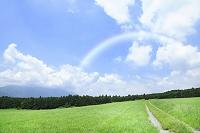 草原の道 虹