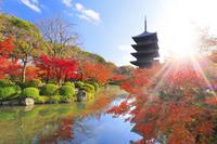 京都府 東寺 五重の塔と瓢箪池の紅葉