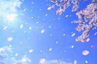 京都府 サクラと太陽