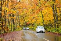 青森県 奥入瀬渓流沿いの紅葉と自動車