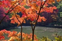 神戸市立 紅葉の森林植物園 長谷池周辺