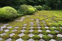 京都府 東福寺 方丈北庭