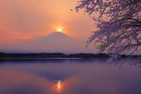 静岡県 田貫湖の朝 ダイヤモンド富士
