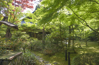 京都府 高桐院(大徳寺塔頭) 古井戸と新緑の庭