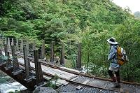 鹿児島県 屋久島 トロッコ道の登山客と安房川