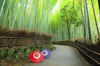 京都府 竹林の小径と蛇の目傘