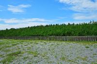中田島砂丘 7月 四季彩 遠州大砂丘