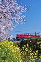 愛知県 五条川の桜と名鉄犬山線 大山寺駅~徳重・名古屋芸大駅