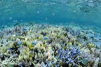 熱帯魚と珊瑚礁