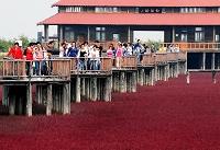 中国 盤錦市 レッドビーチ