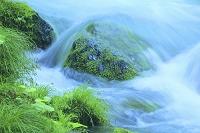 青森県 奥入瀬 石ヶ戸 若草と流れ