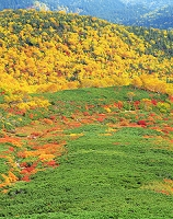 長野県 ハイマツの海を走る紅葉の帯