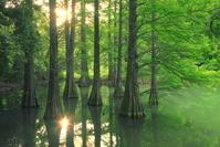 福岡県 篠栗九大の森公園