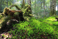 長野県 白駒の池 苔の森