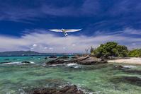 沖縄県 エリグロアジサシの飛翔